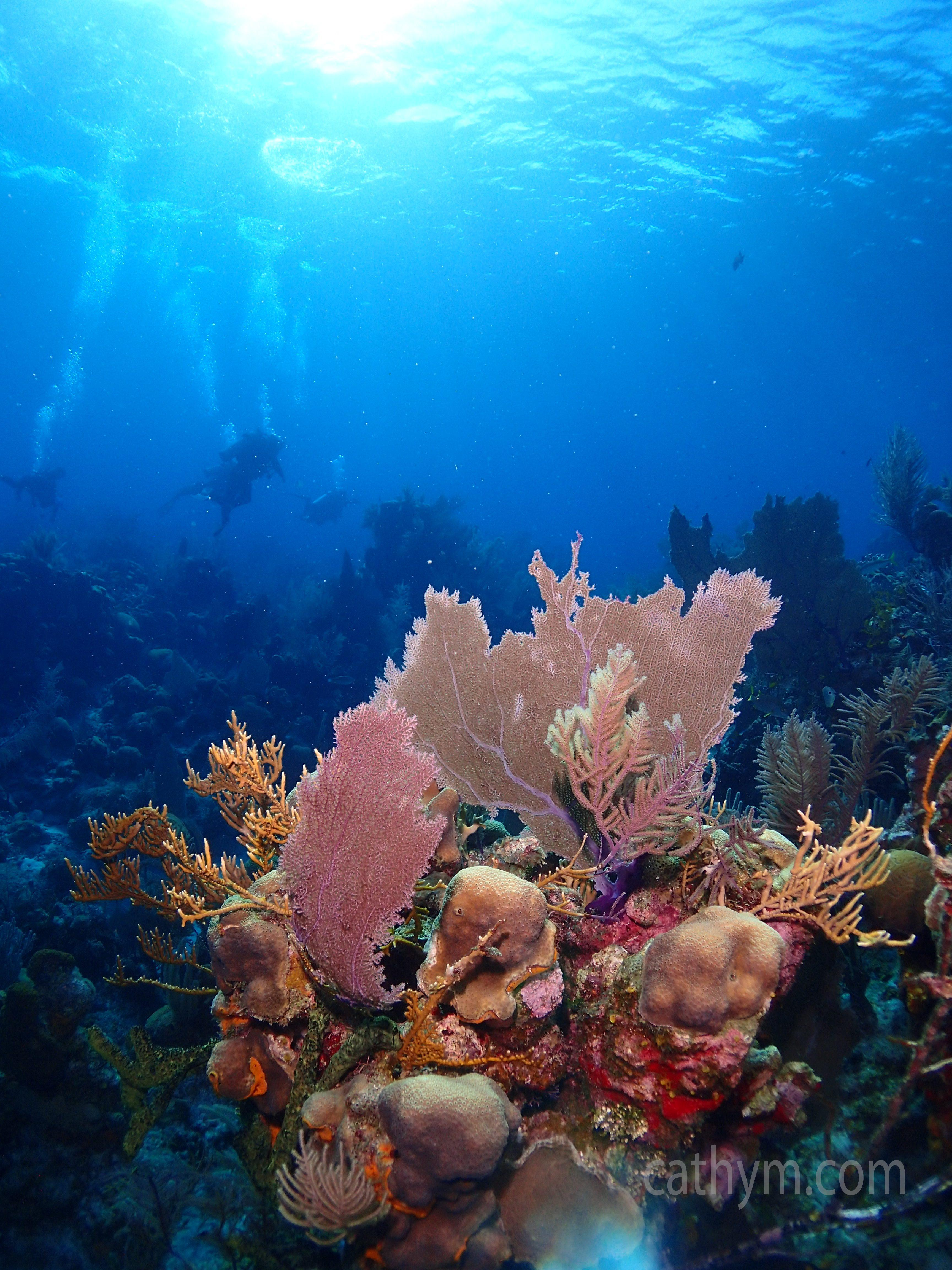 Reef and Divers