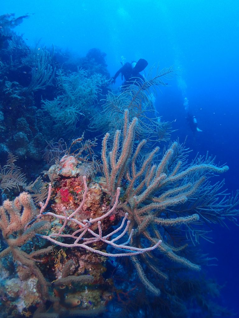Soft Coral and Divers