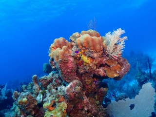 Colorful Reef