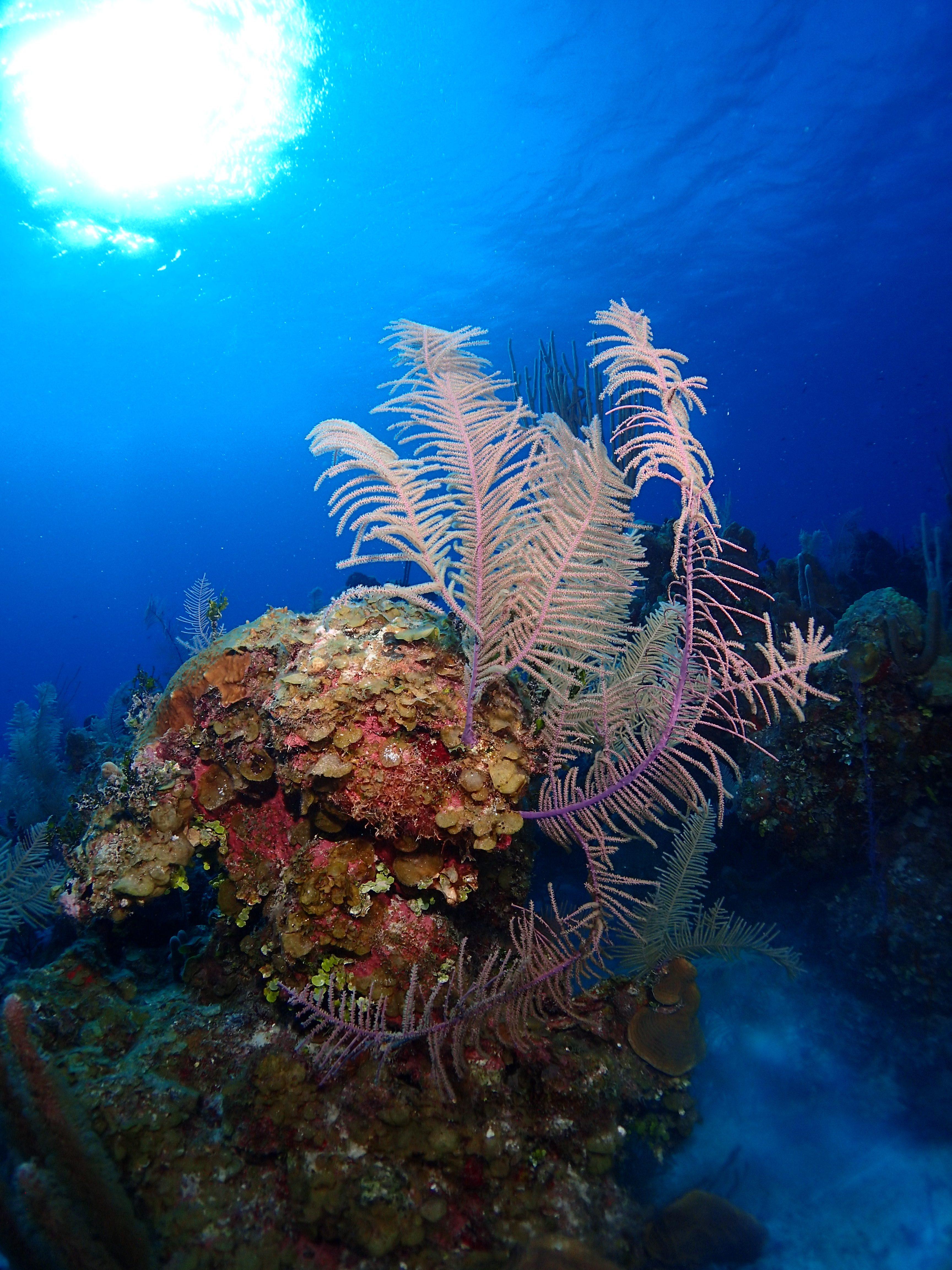 Reef in the Sun