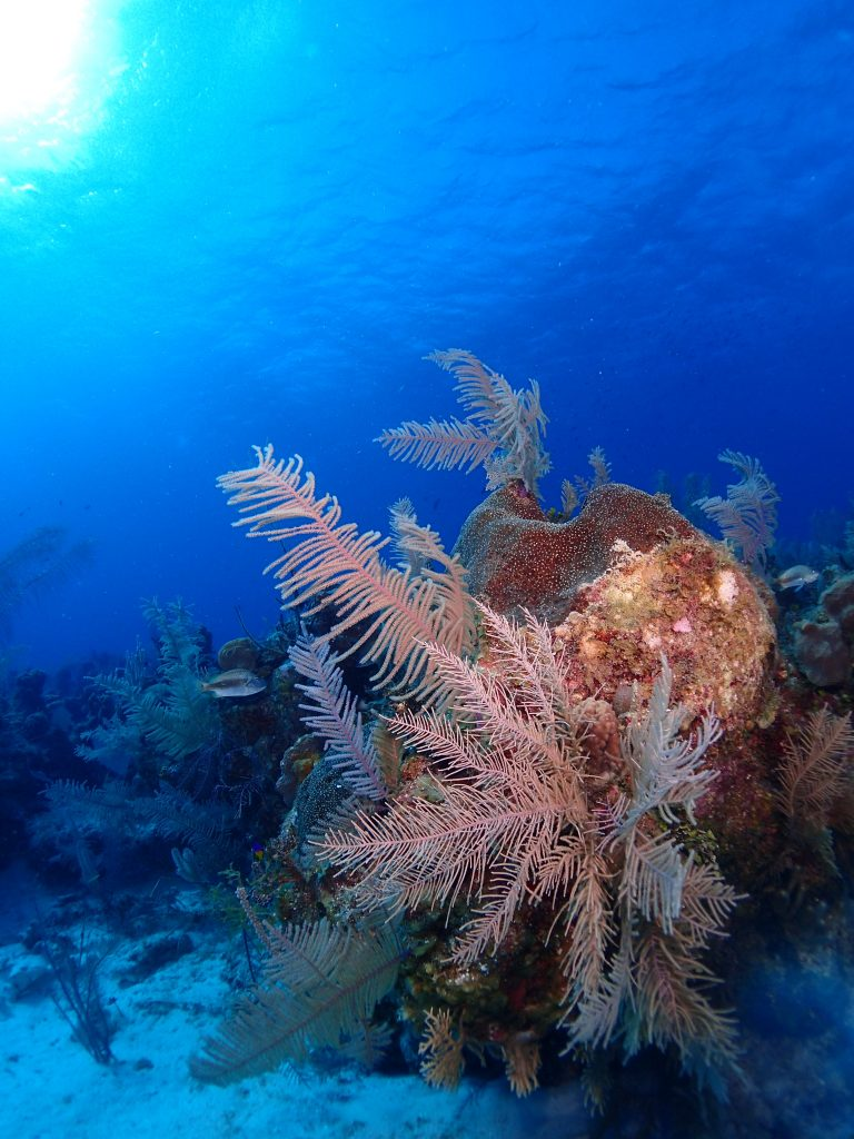 Reef, Sponge in the Sun