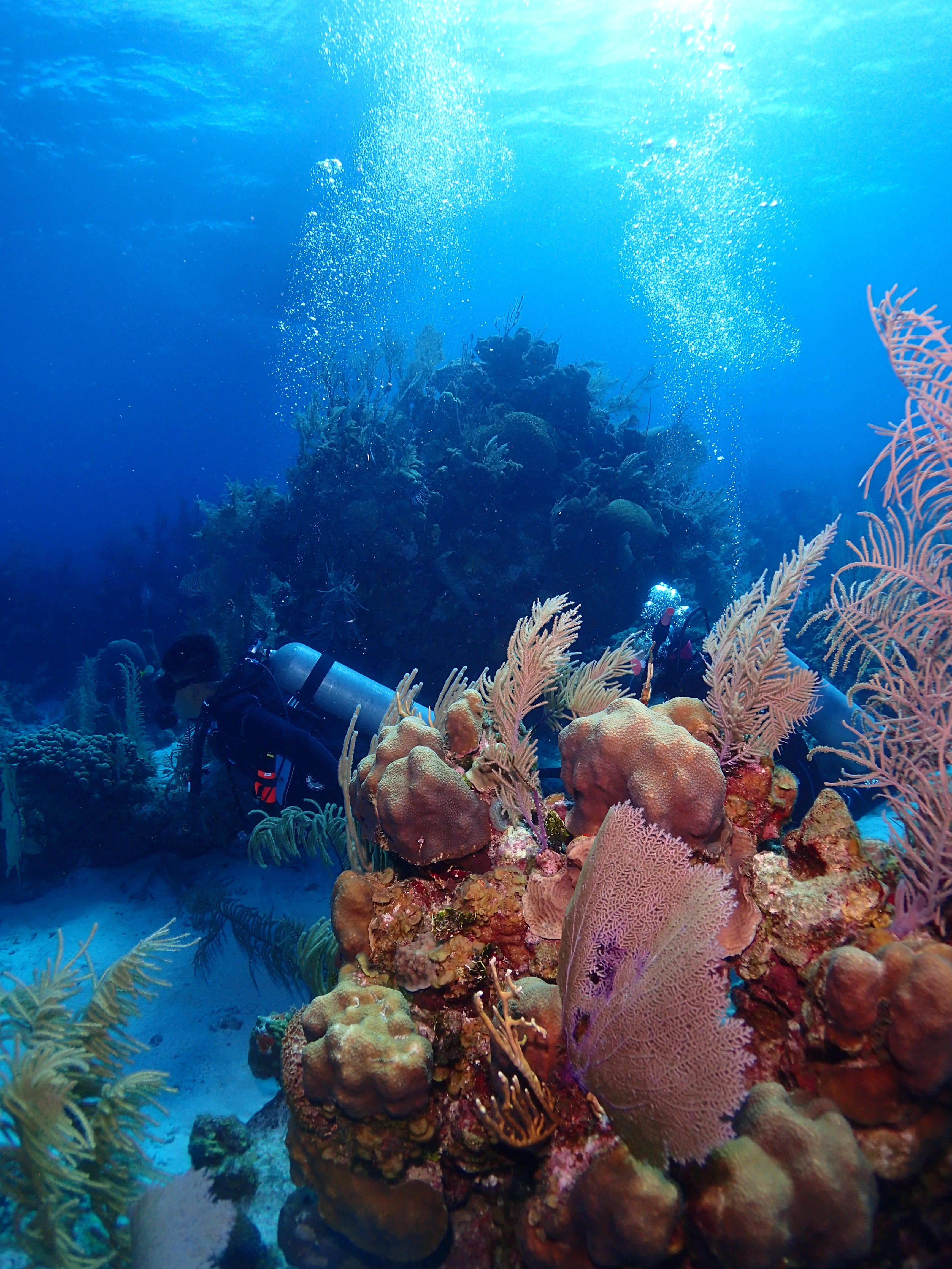 Divers in the Aquarium
