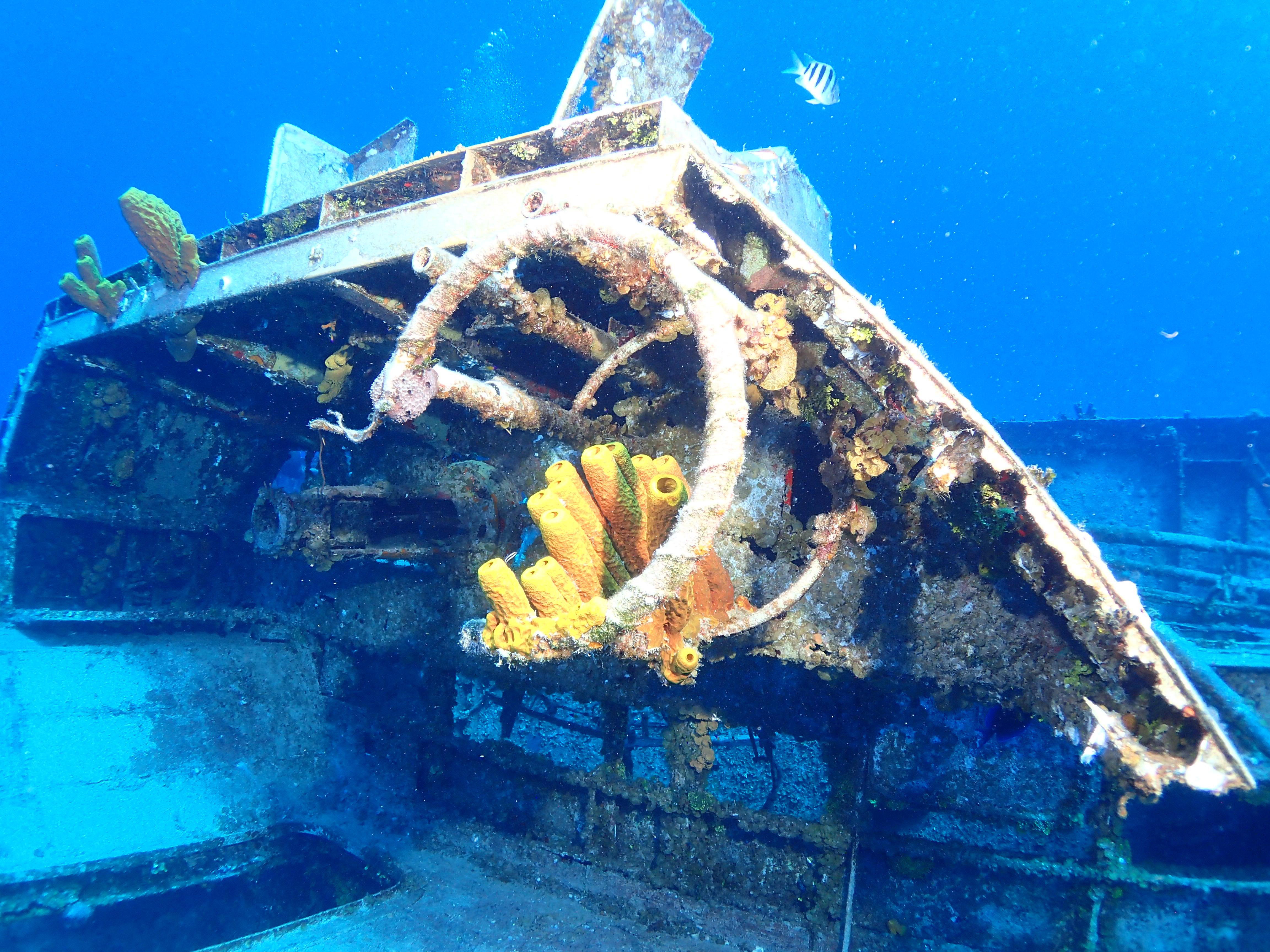 Sponges on the Wreck