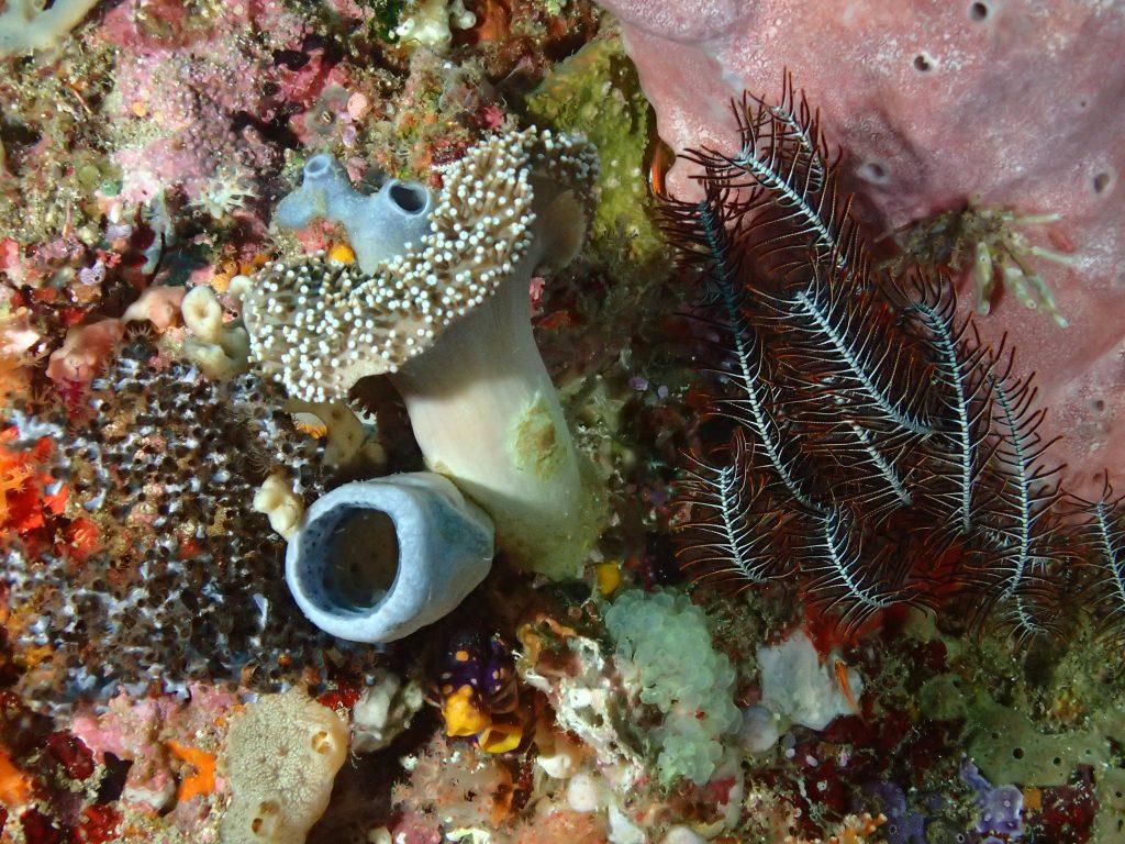 Anemone, Sponge
