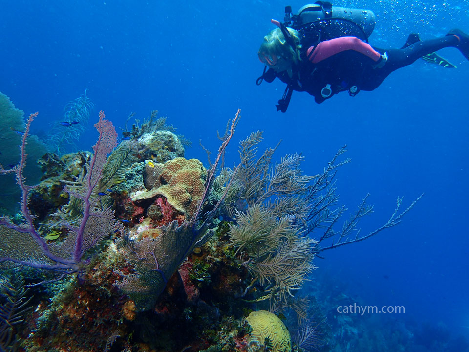 Diver on Reef